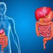 Digestive system without lungs